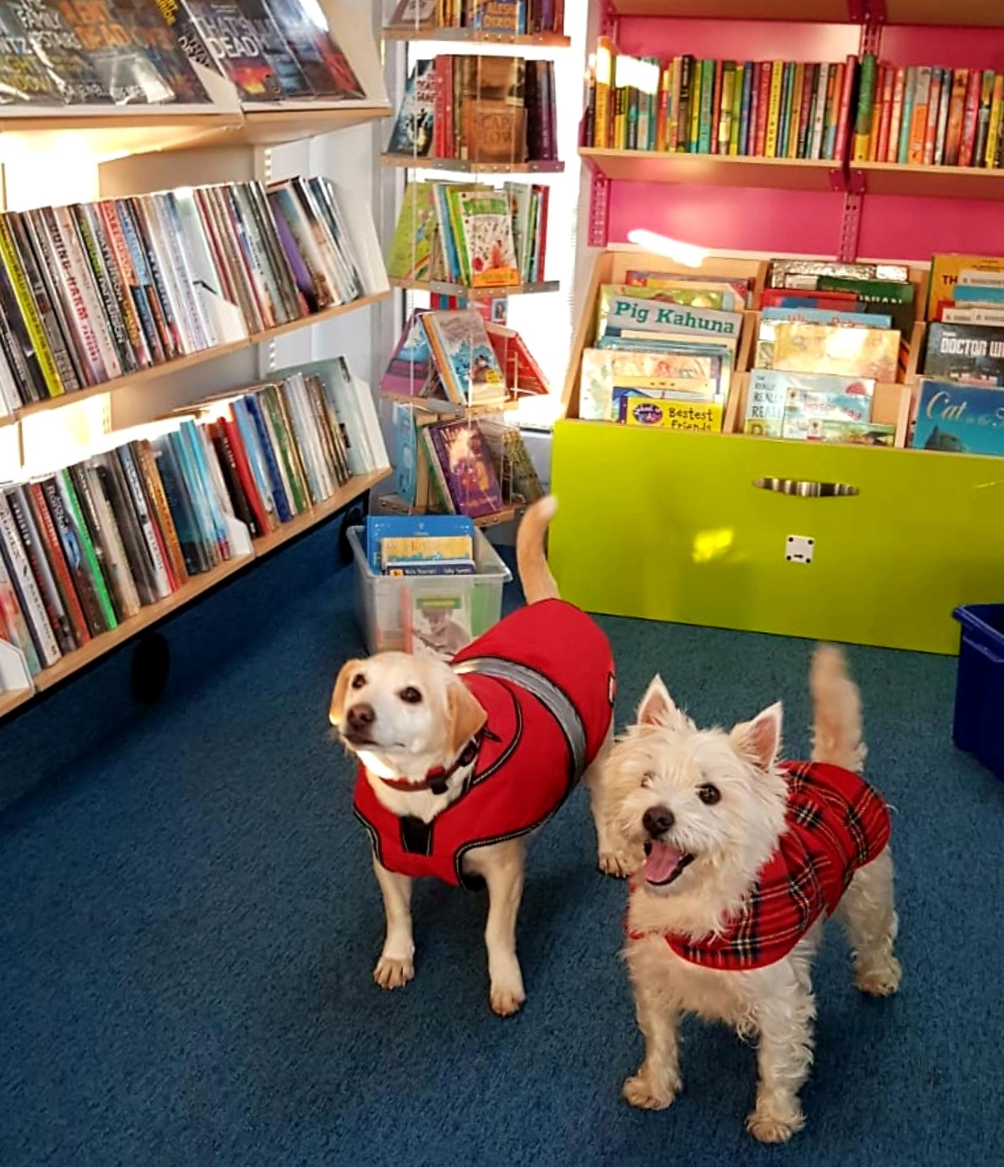 Dogs in our libraries